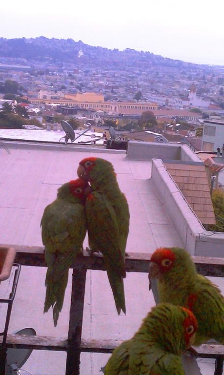 9311lovebirds.jpg