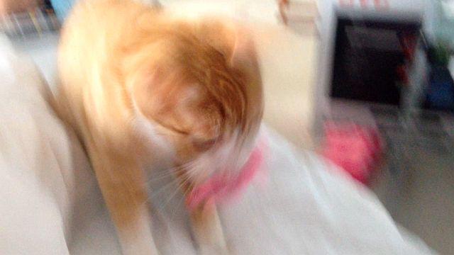 12215-fido-blur.jpg